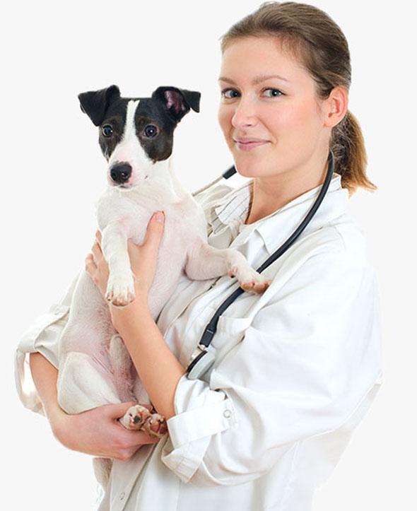 Web Design animals benefits